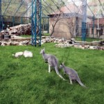 bgd---zoo-vrt_620x0