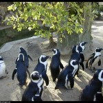 pinguins-1022.3